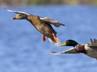 Vogelleben im Wandel der Jahreszeiten