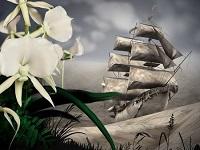 Darwins Orchideen - Wunder der Evolution