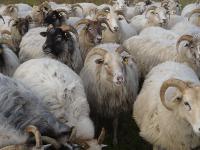 Filzen für Erwachsene mit gefärbter Schafwolle - Fortgeschrittenenkurs